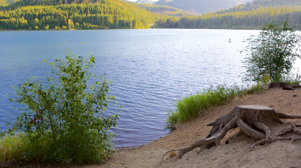 Central Washington which includes forest scenes and a lake or waterhole