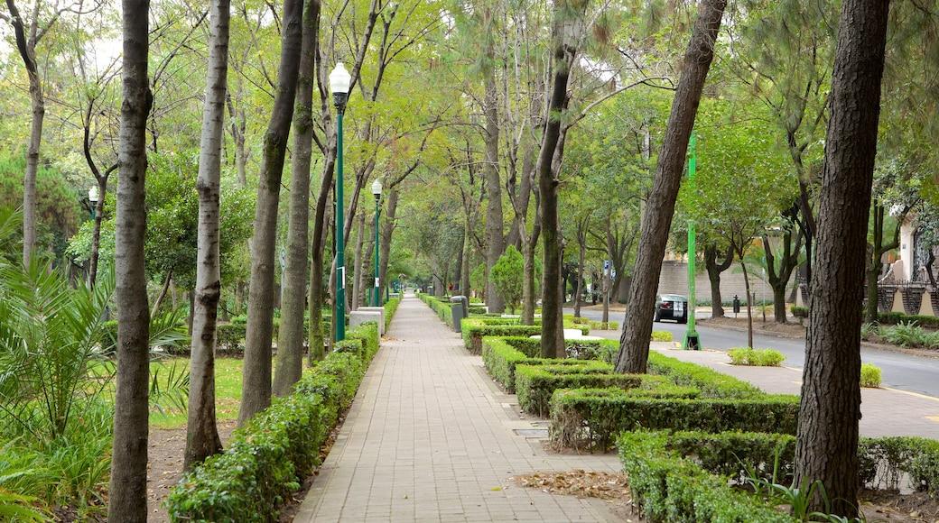 Polanco que incluye un parque