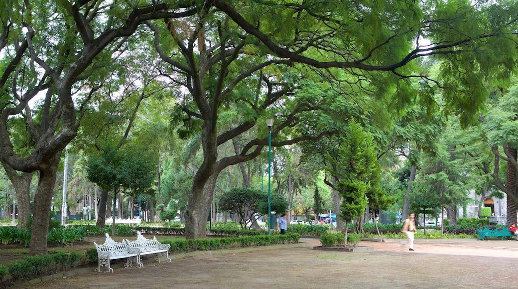 Polanco ofreciendo un parque o plaza y un jardín