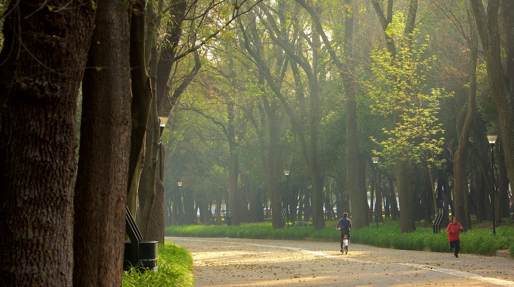 Chapultepec Park showing a garden