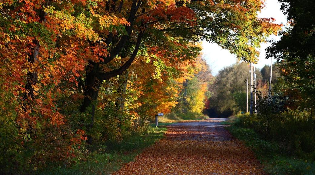 Peterborough showing autumn leaves