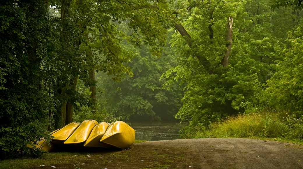 Peterborough which includes forests and kayaking or canoeing