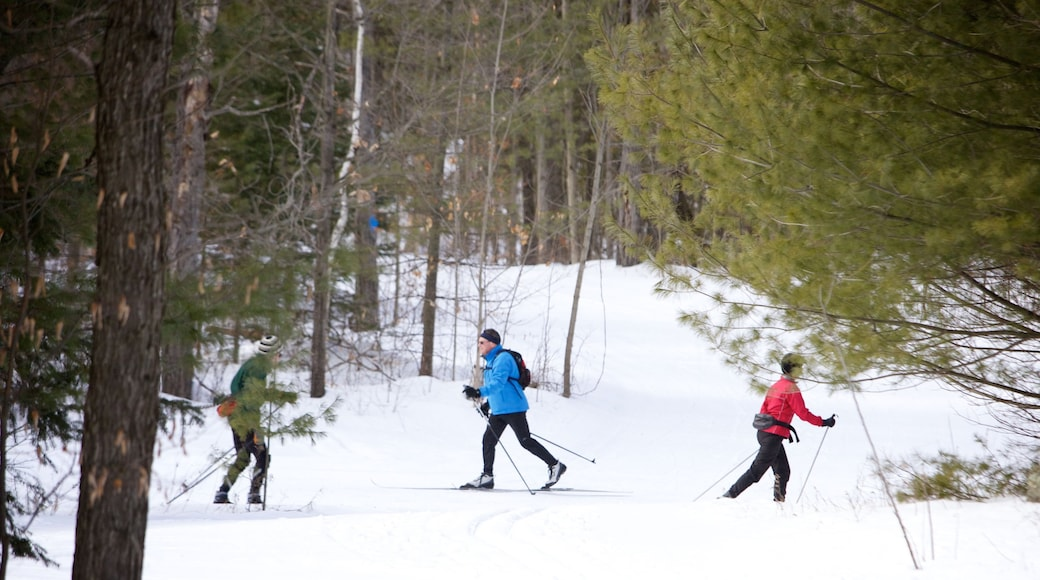 Peterborough showing forests, snow and snow skiing