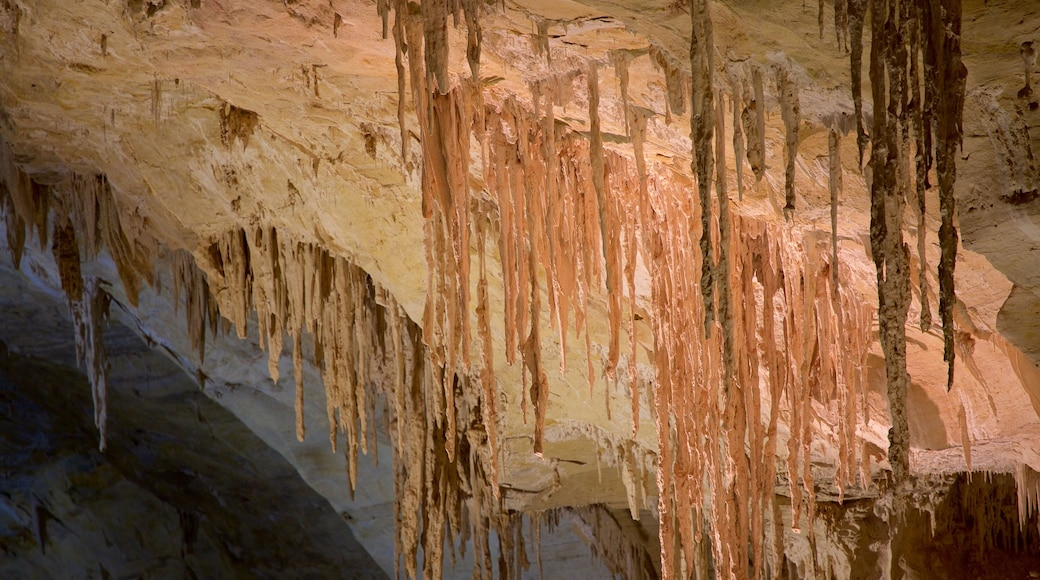 Carlsbad Caverns National Park featuring caves