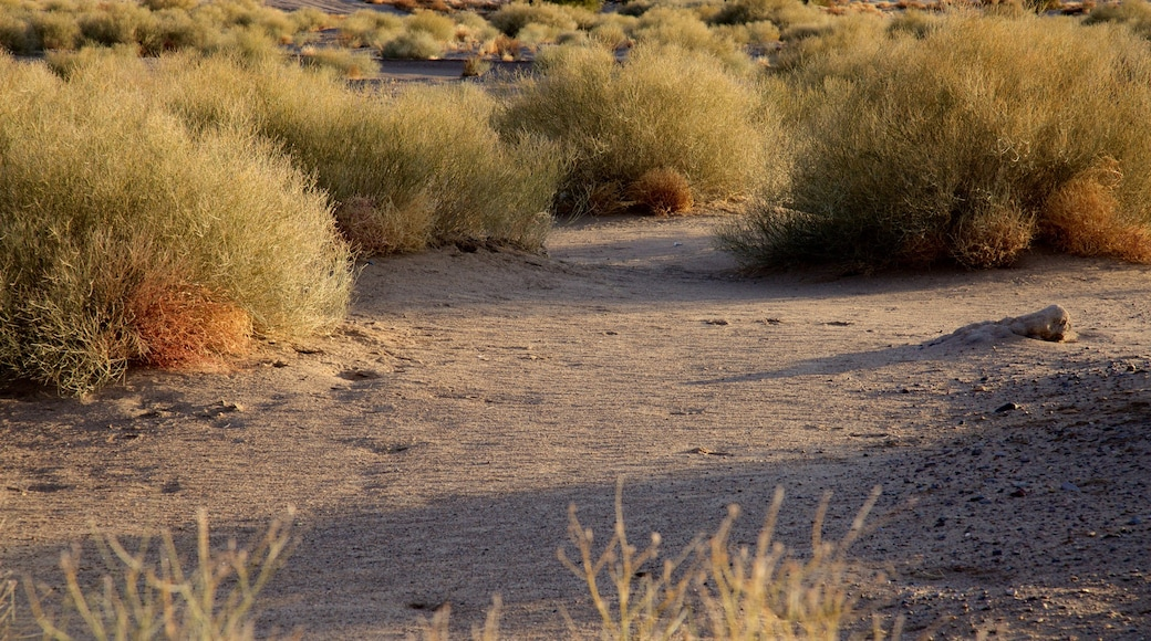 Elephant Butte which includes tranquil scenes and a sandy beach