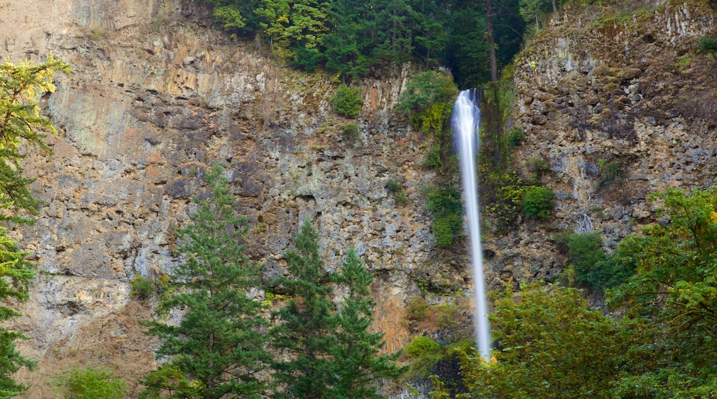 Multnomah Falls which includes a cascade and a gorge or canyon