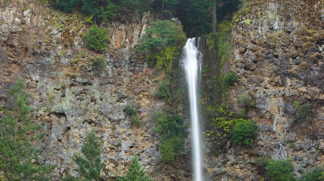 Multnomah Falls showing a gorge or canyon and a waterfall