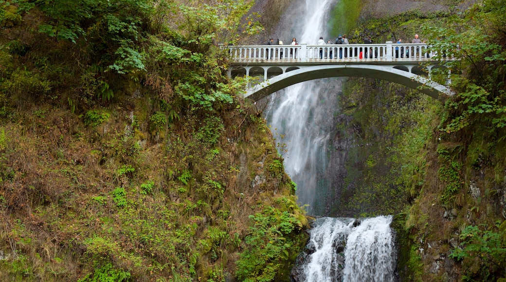 Multnomah Falls which includes a bridge, a waterfall and rainforest