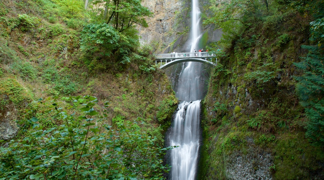 Multnomah Falls featuring rainforest, a bridge and a waterfall