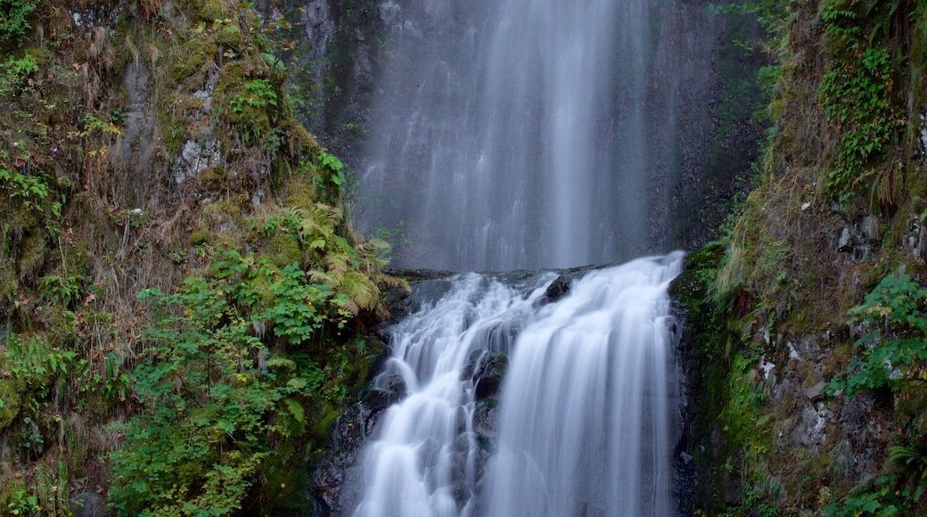 Multnomah Falls which includes a waterfall and rainforest