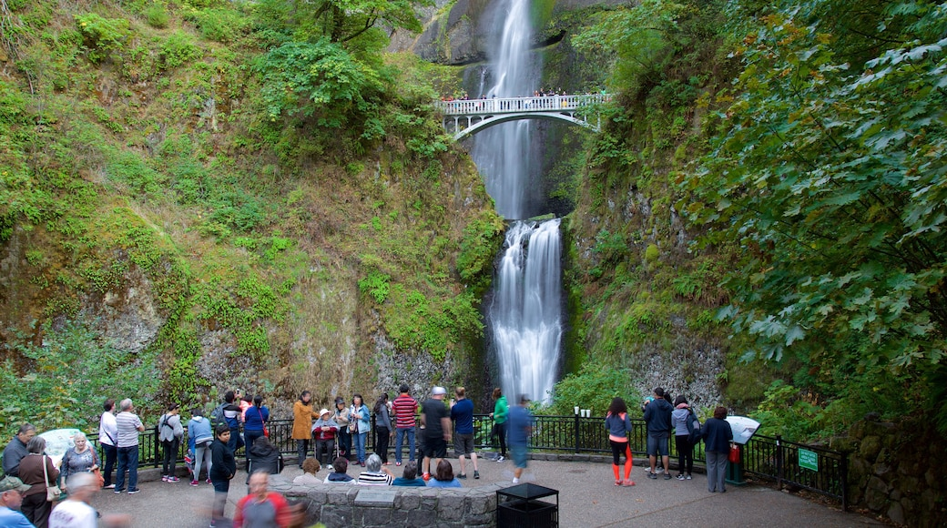 Multnomah Falls featuring a cascade and views as well as a large group of people
