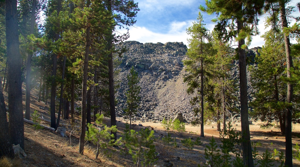 Newberry National Volcanic Monument which includes forests