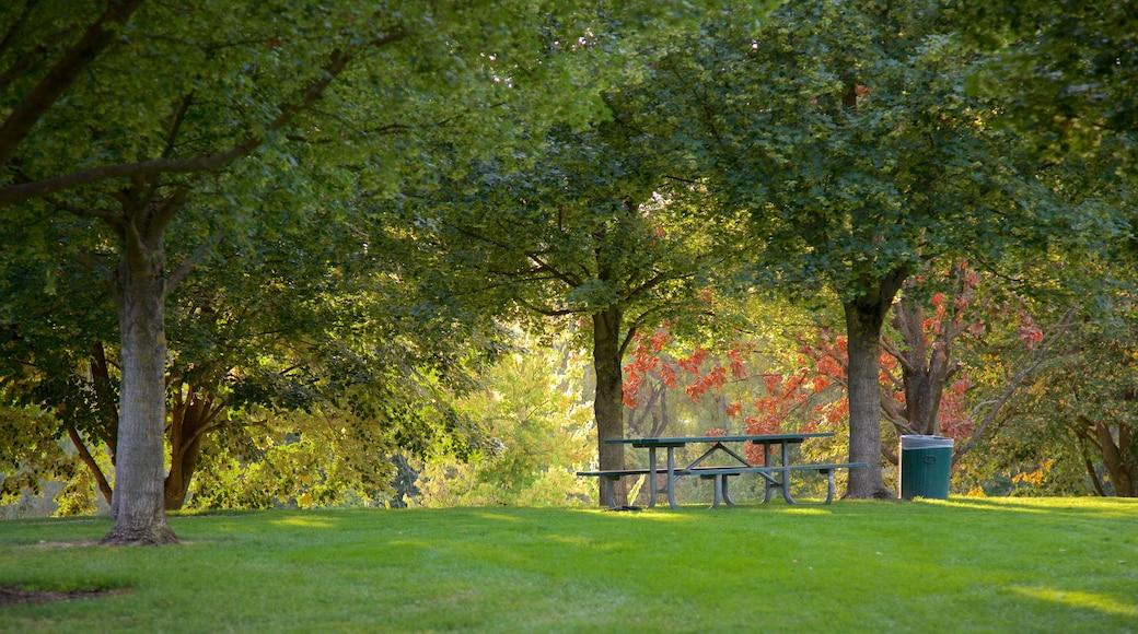 Medford featuring a garden