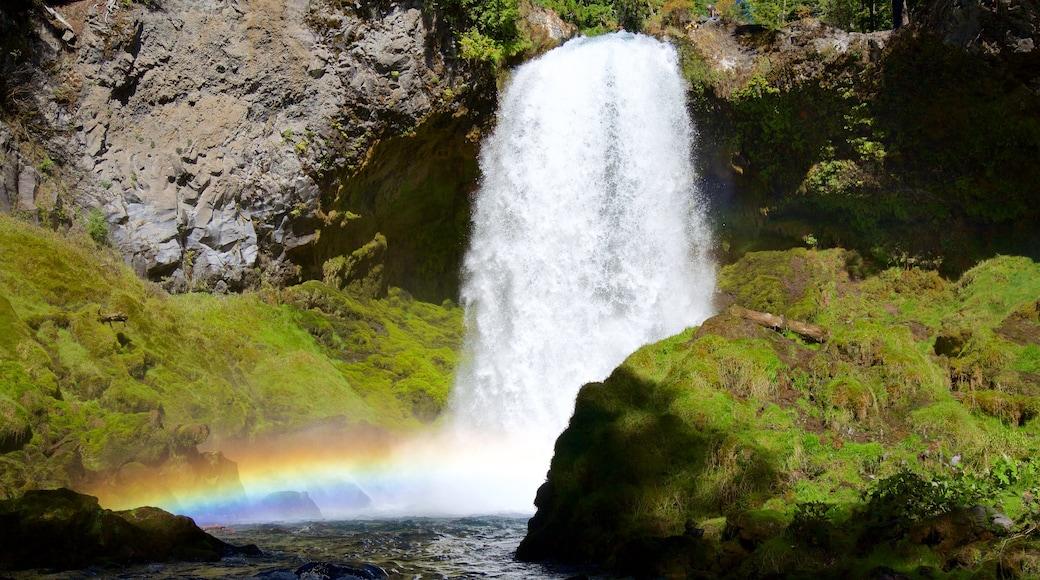Oakridge showing rainforest and a cascade