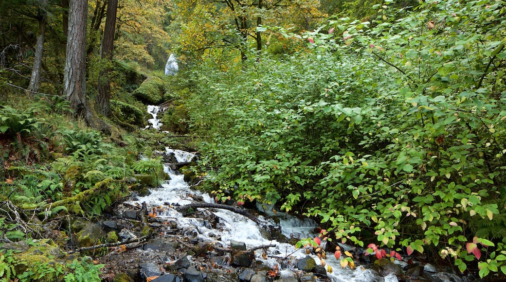 Wahkeena Falls featuring a river or creek and rainforest