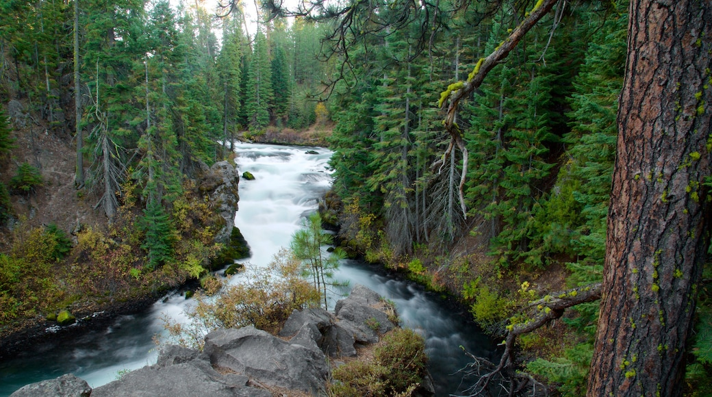 Deschutes National Forest which includes rapids and forests