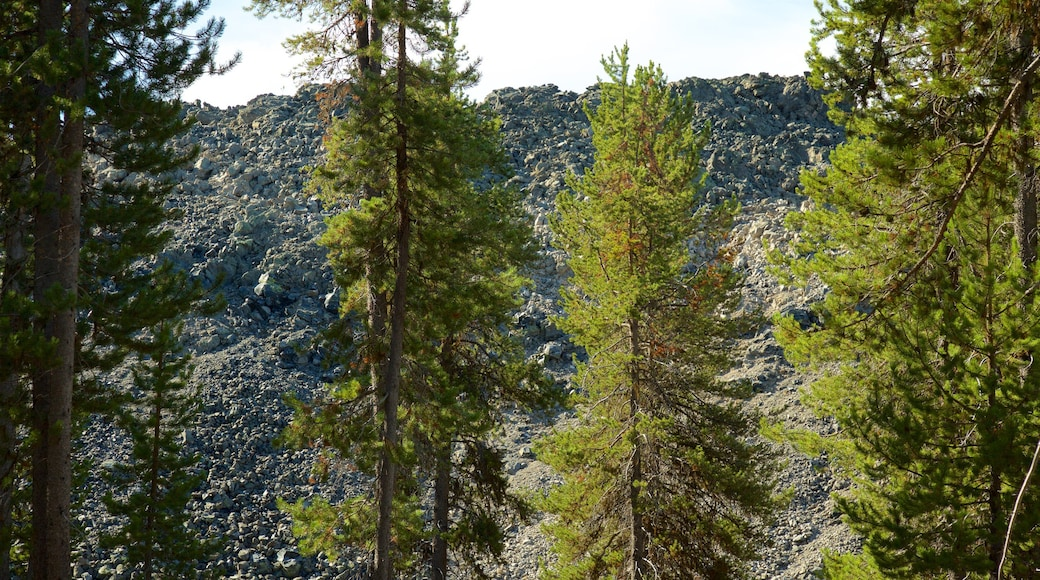 Newberry National Volcanic Monument which includes forest scenes