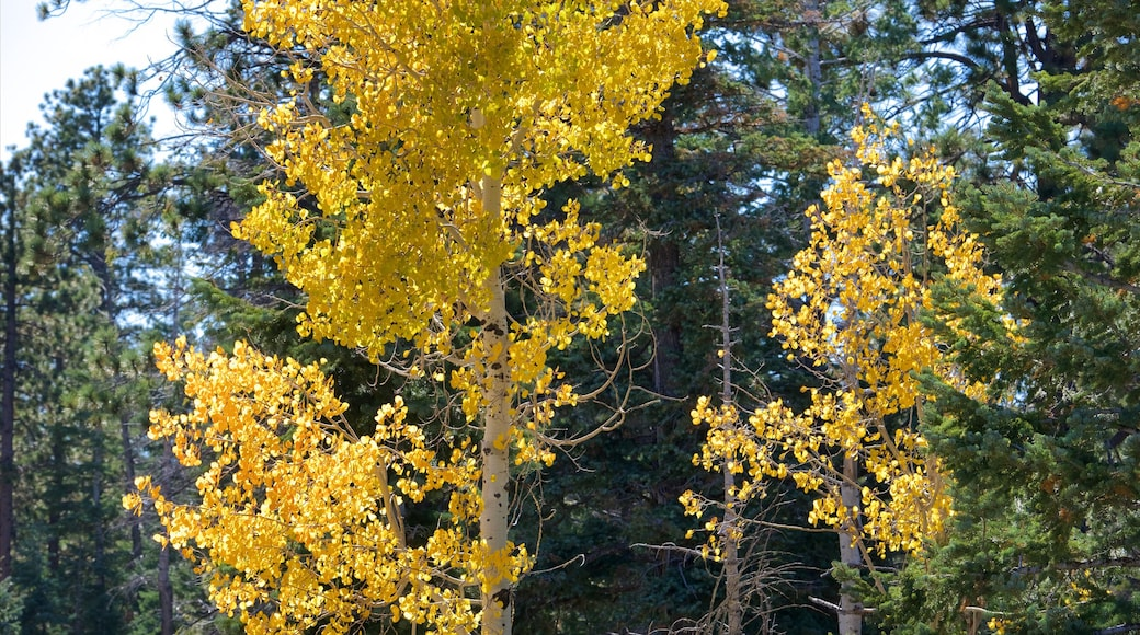 Bryce Canyon National Park which includes forests and autumn leaves