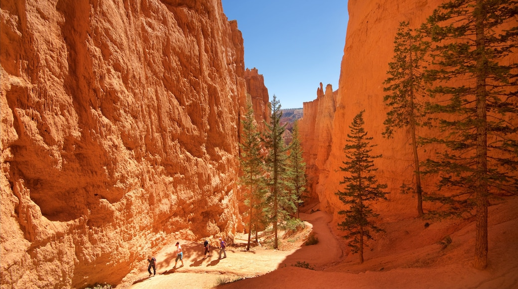 布萊斯峽谷國家公園 呈现出 寧靜風景, 沙漠風景 和 峽谷