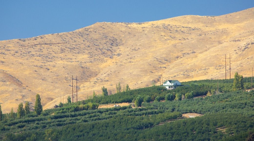 Wenatchee which includes tranquil scenes and farmland
