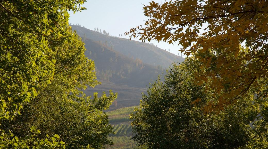 Central Washington featuring farmland