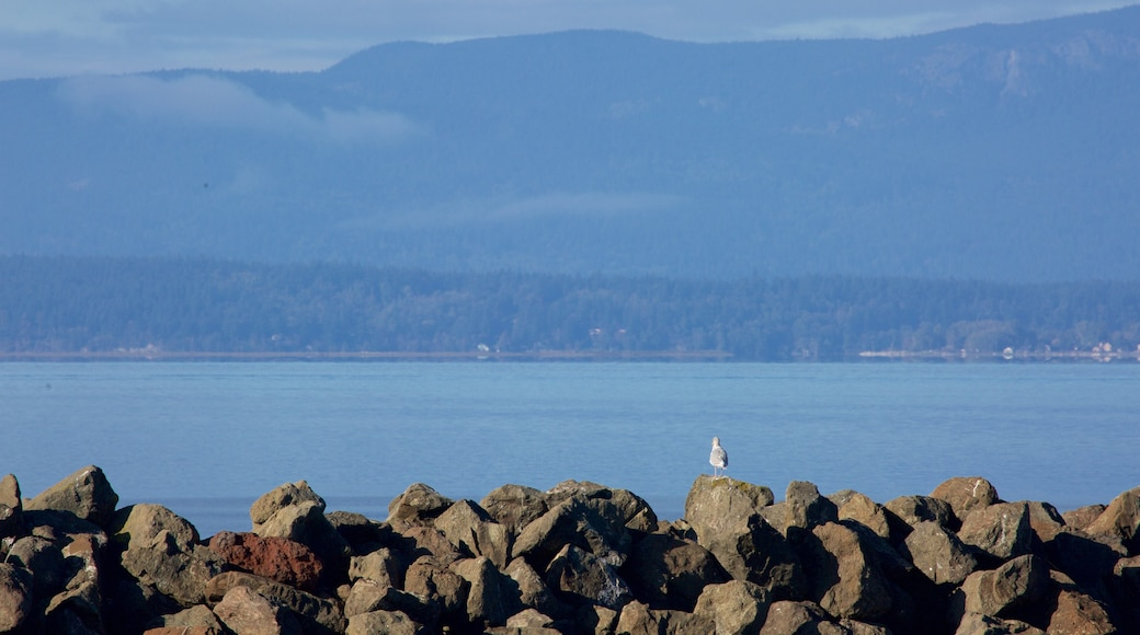 Bellingham which includes a bay or harbour and rocky coastline