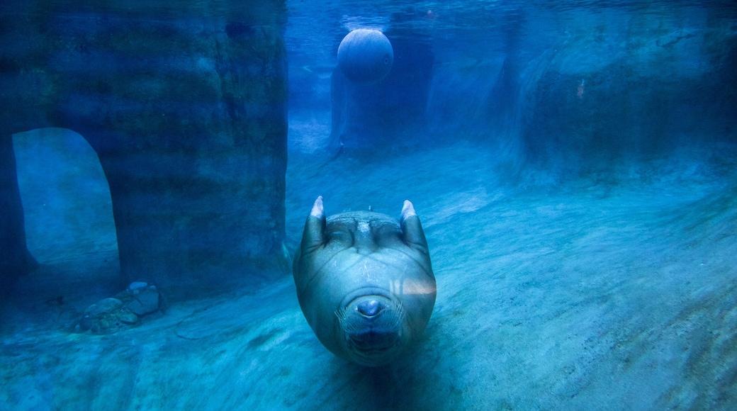 Point Defiance Zoo and Aquarium showing marine life