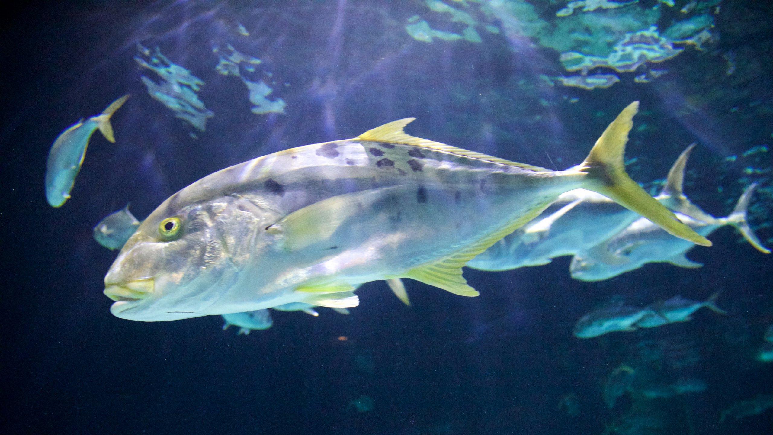 Point Defiance Zoo and Aquarium, Tacoma, Washington, United States of America
