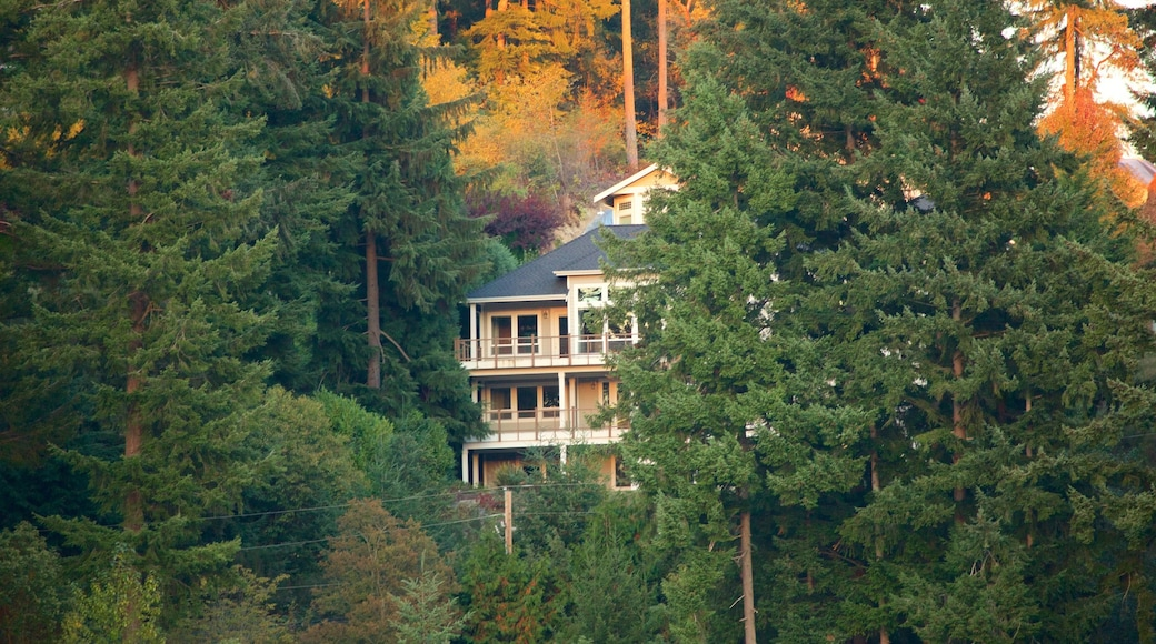 Gig Harbor featuring a house and forest scenes