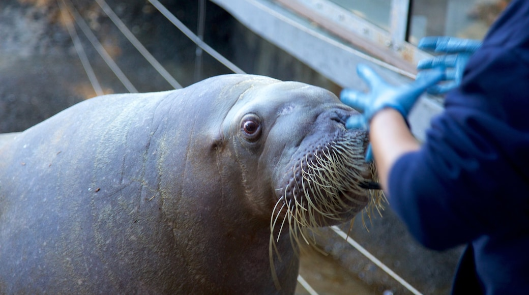 Point Defiance Zoo and Aquarium showing zoo animals and marine life