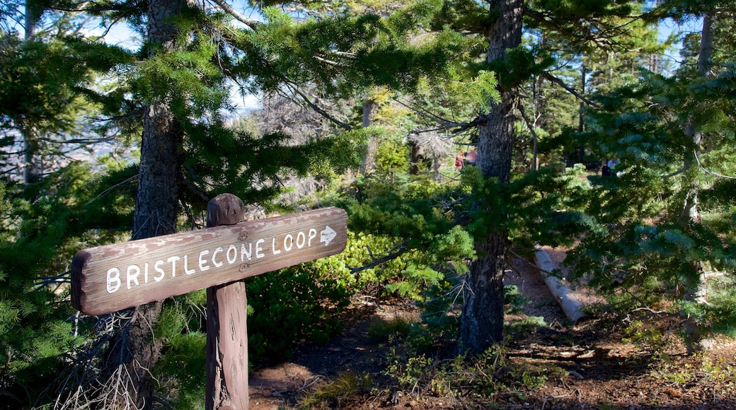 Rainbow Point featuring tranquil scenes, signage and hiking or walking