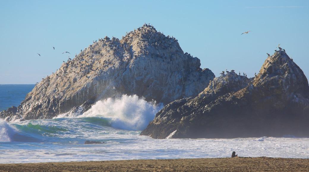 Ocean Beach featuring a beach, general coastal views and bird life
