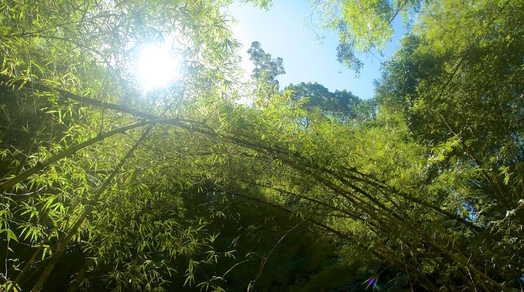 Akaka Falls featuring rainforest
