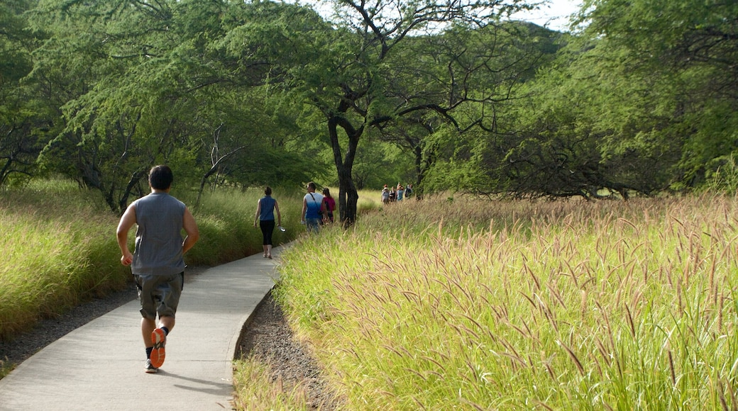 Oahu Island which includes hiking or walking and a garden
