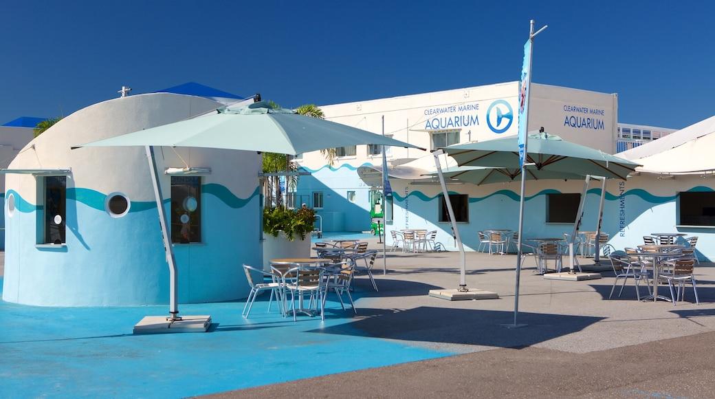 Clearwater Marine Aquarium showing marine life