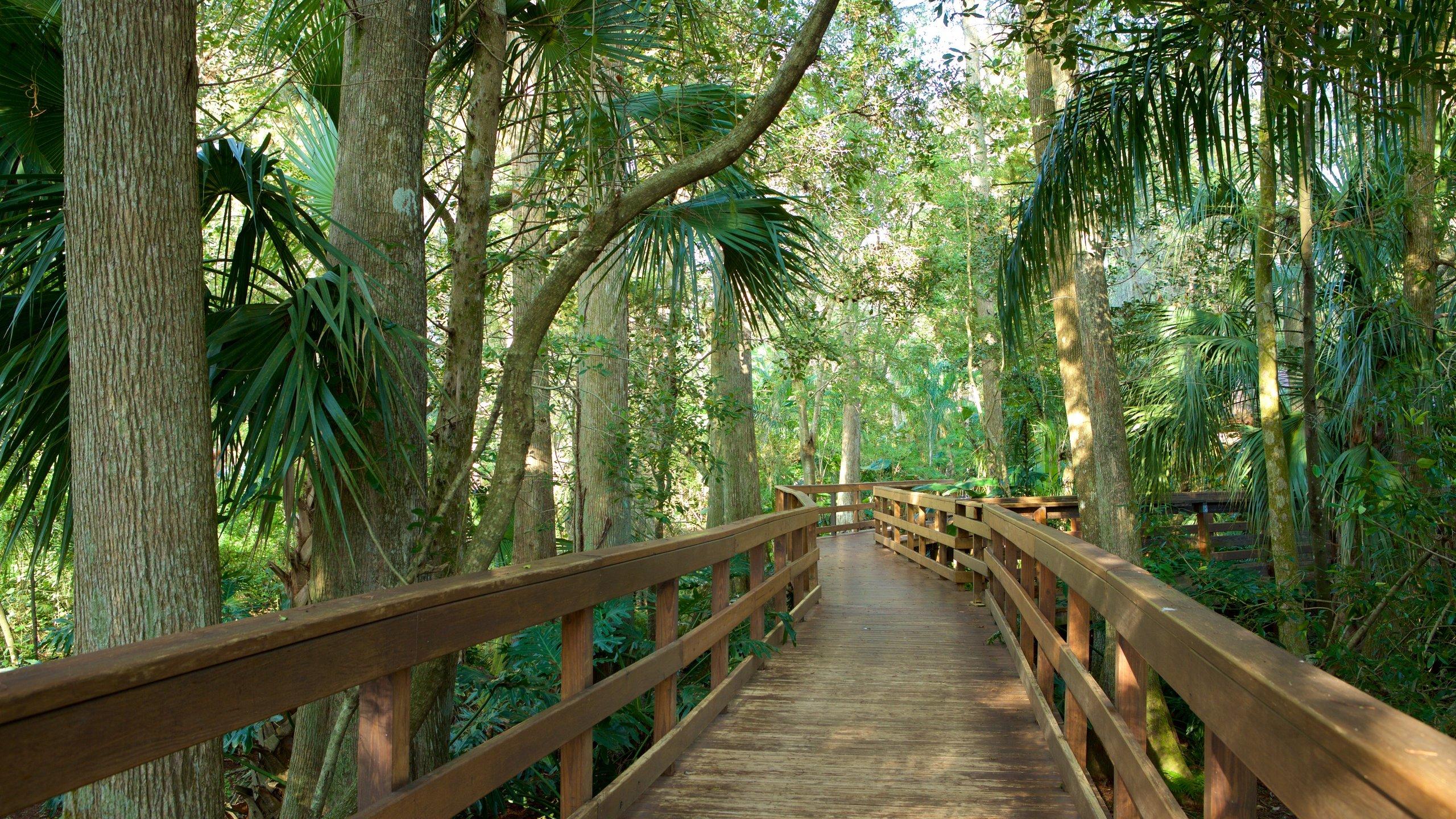 Plant City, Florida, United States of America