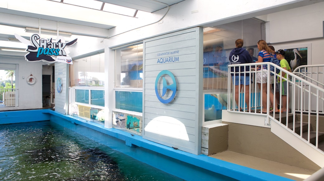 Clearwater Marine Aquarium showing marine life as well as a small group of people