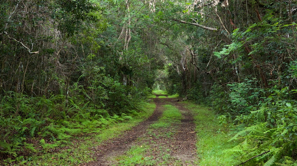 Everglades National Park featuring forest scenes