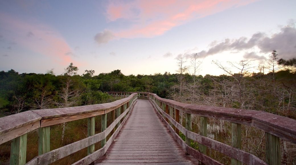 Everglades National Park showing a sunset, forest scenes and a bridge
