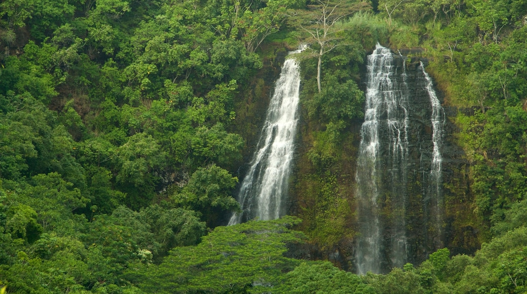 Kapaa featuring forests and a waterfall