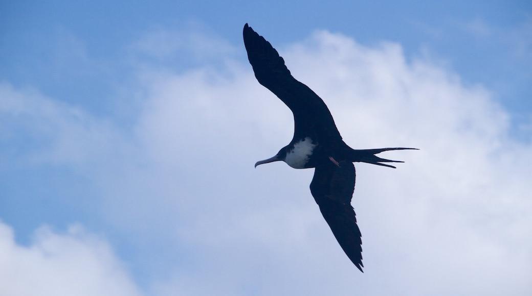 Kilauea Lighthouse which includes bird life
