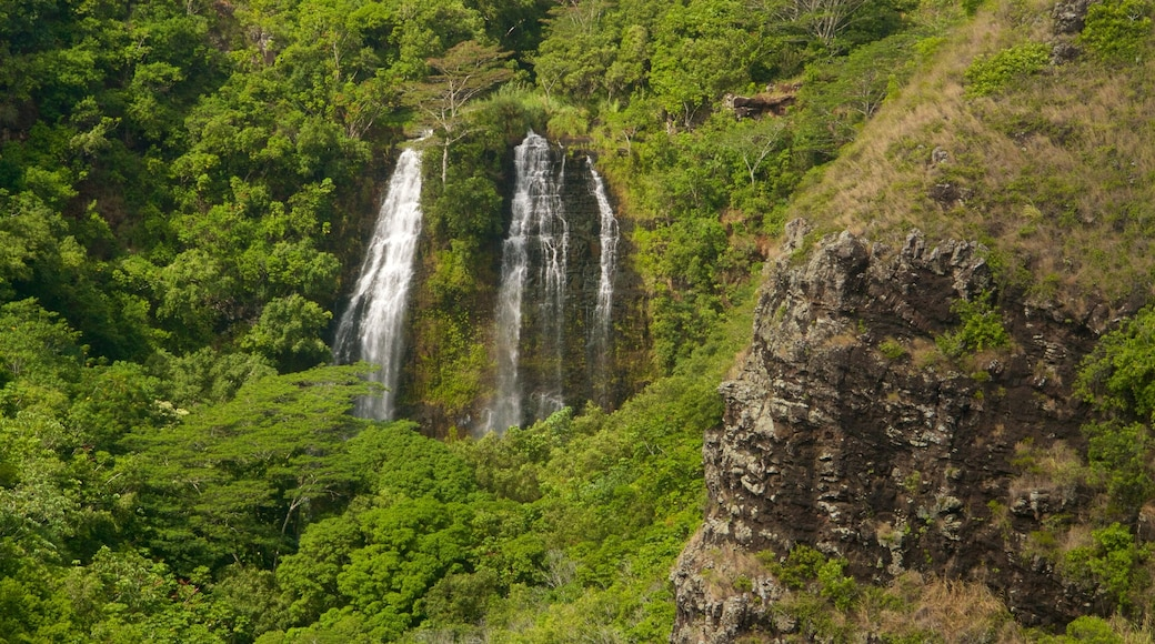 Opaekaa Falls featuring forests and a waterfall