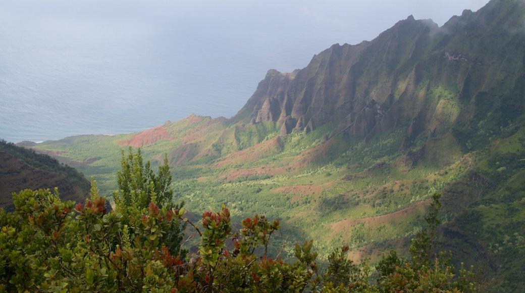 Pu\'u O Kila Lookout showing landscape views and a gorge or canyon