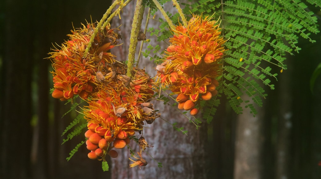 Na Aina Kai Botanical Gardens showing wild flowers
