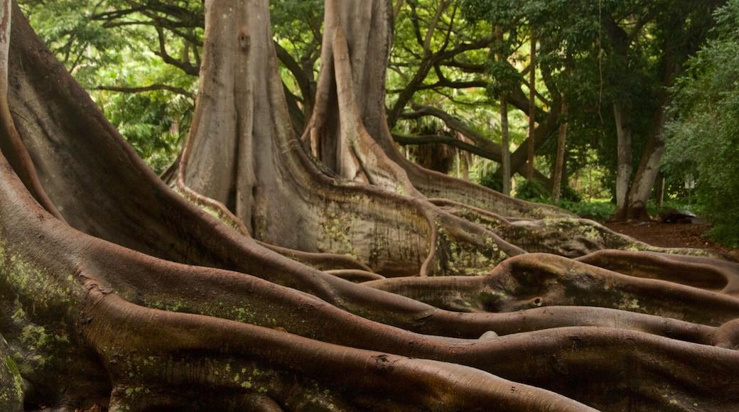 Allerton Botanical Garden which includes a garden and forest scenes