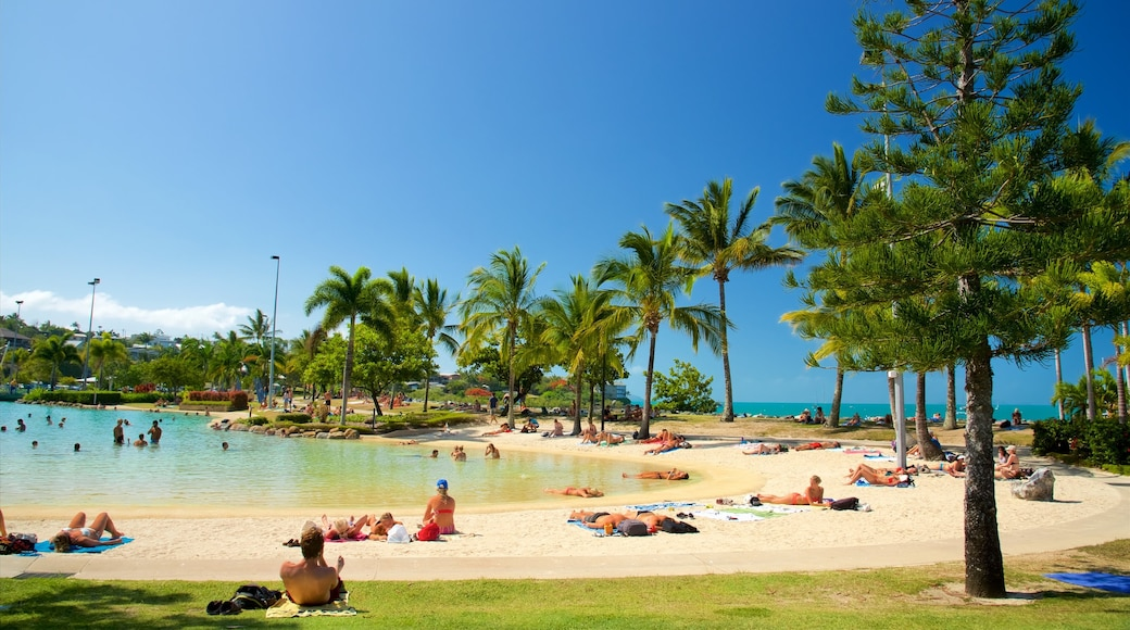 Airlie Beach Lagoon featuring swimming, tropical scenes and a luxury hotel or resort
