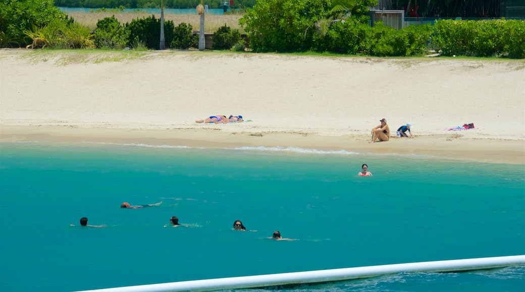 Airlie Beach which includes a sandy beach and tropical scenes as well as a small group of people