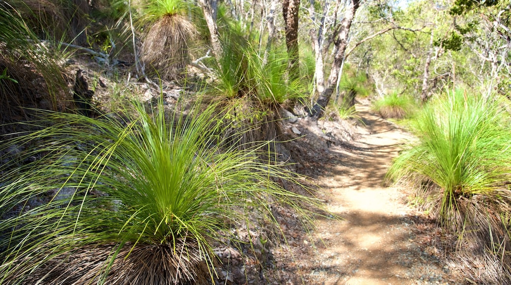 Conway National Park showing forest scenes