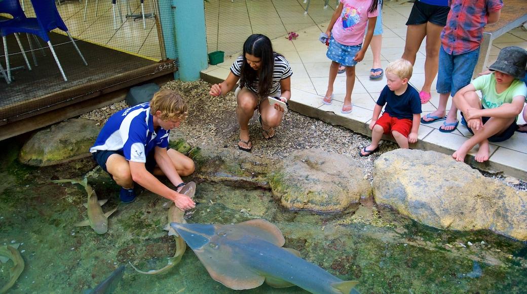 Daydream Island mit einem Meeresbewohner sowie Familie