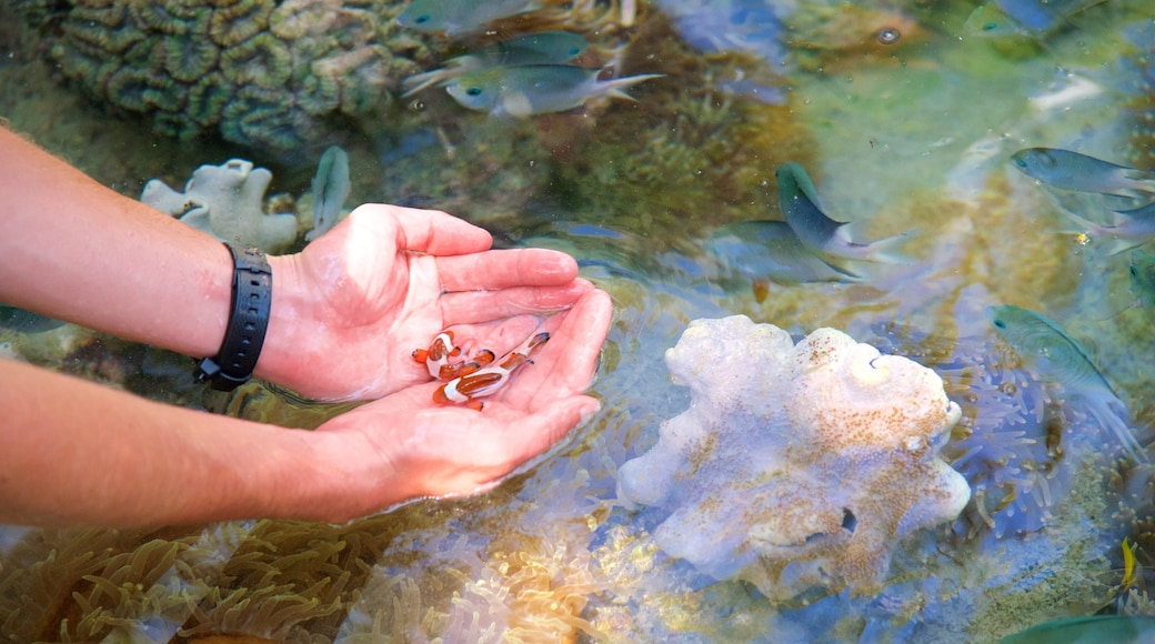 Daydream Island which includes marine life and coral as well as an individual male